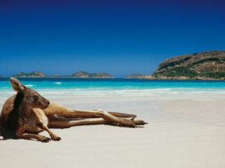 Медицинская страховка для поездки в Австралию