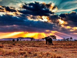 Медицинская страховка для поездки в Танзанию